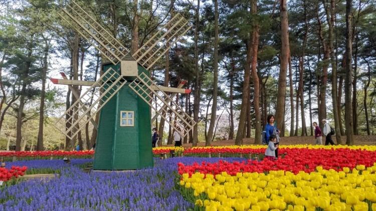 Tulip- Hitachi Seaside Park